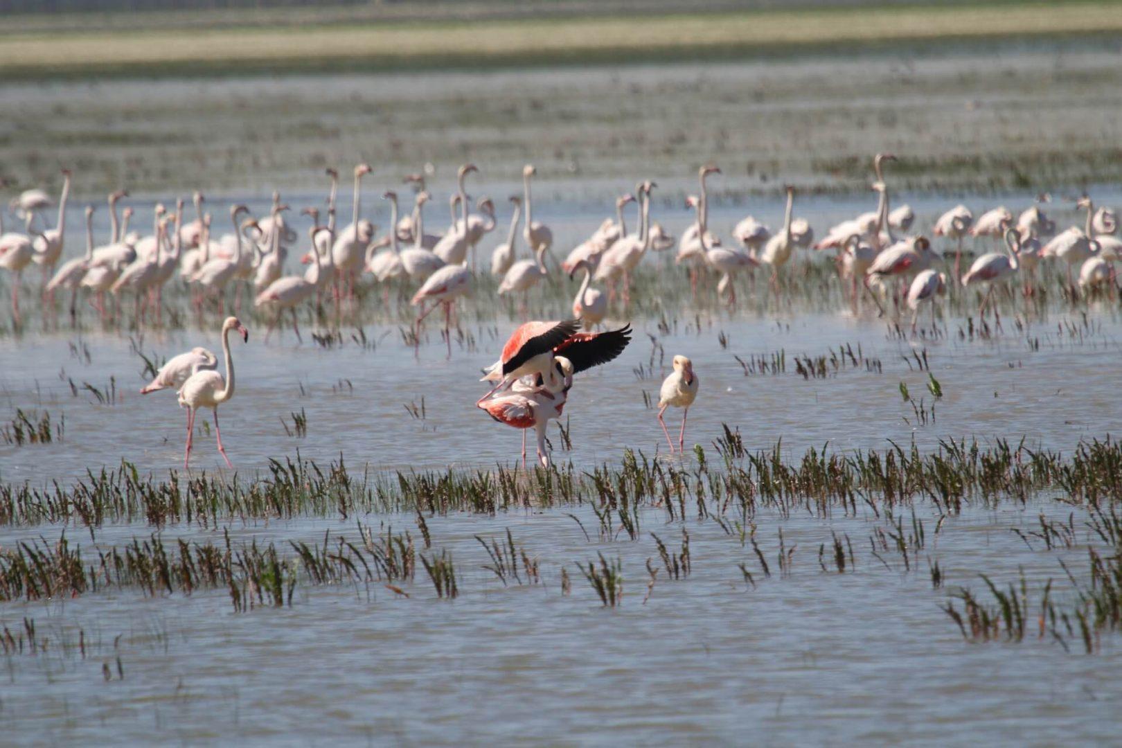 Marismas en el parque nacional de Doñana en Andalucía