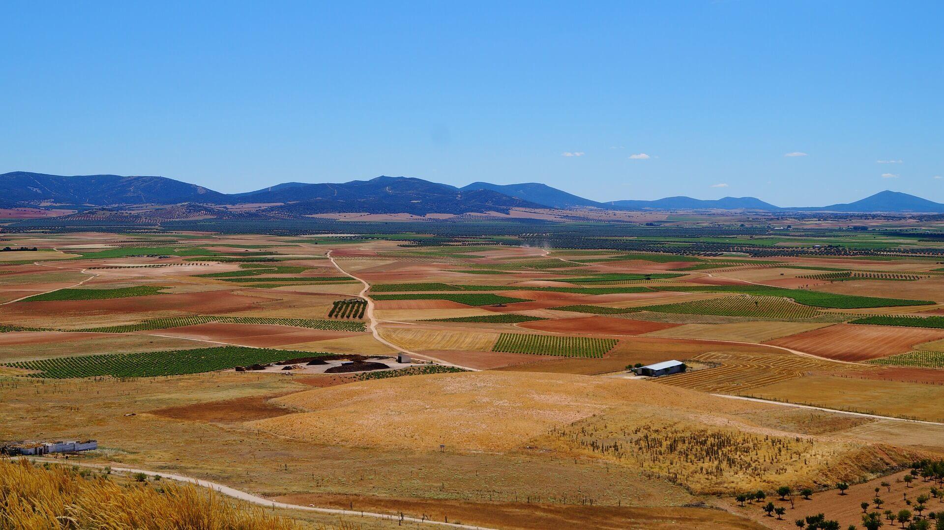 Campos de trigo, viñas y olivos en La Mancha